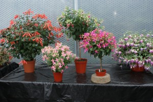 Keder greenhouse- Home to Best in Show
