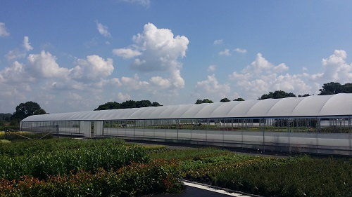 Greenhouse 50m long