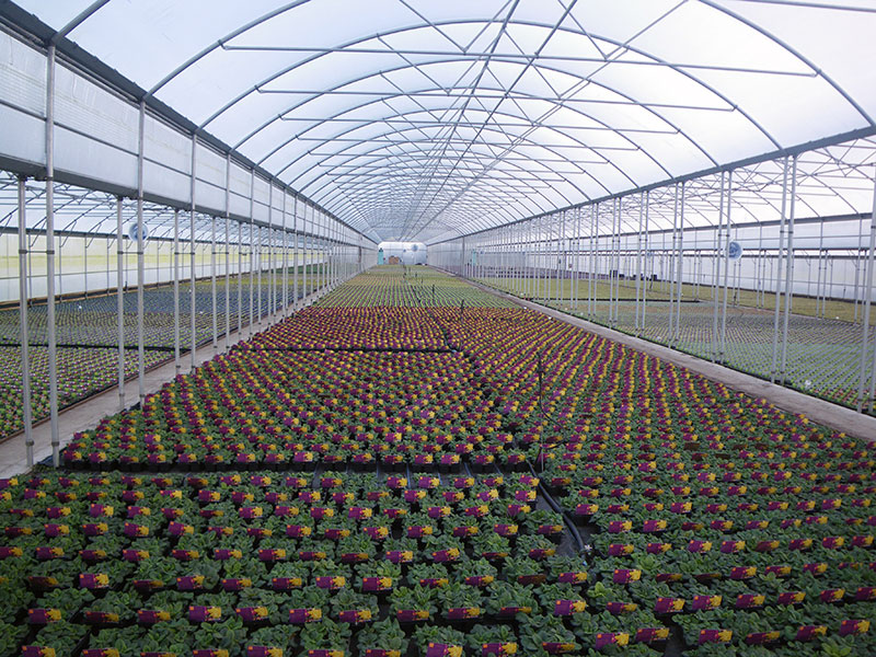 Keder Greenhouse - perfect growing environment