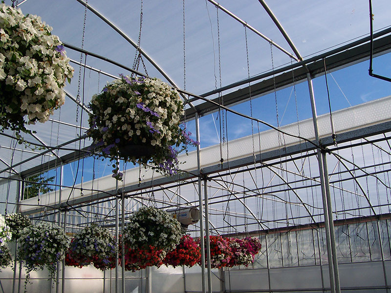 Keder Greenhouse roof vent and hanging basket production