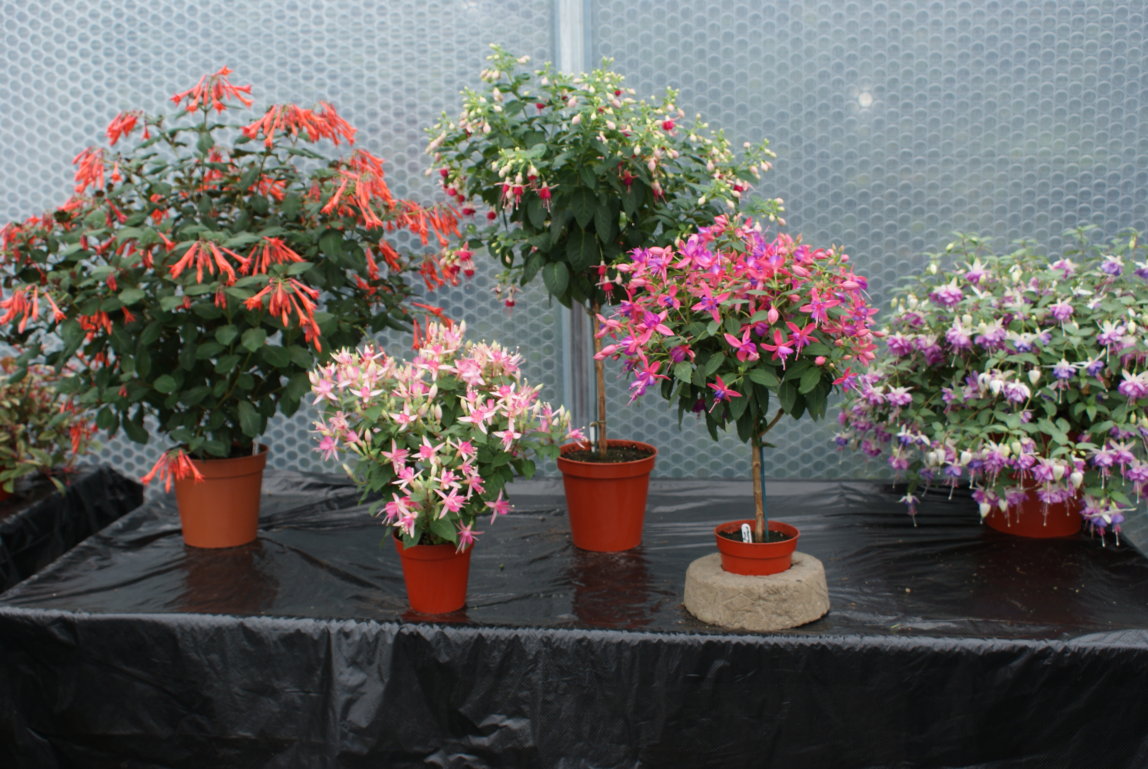 Keder Greenhouse Home To Best In Show Keder Greenhouse