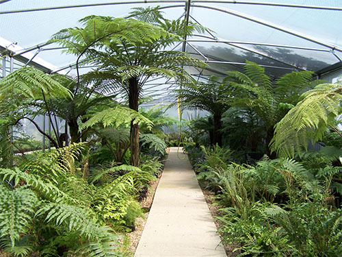 A fern winner for Keder greenhouses!