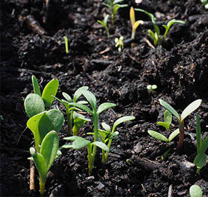 Ready, Set, Sow! When is the time to start sowing your produce?